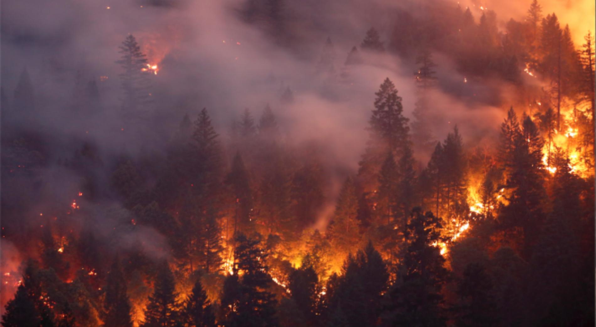 Българите не пострадаха при пожари в Гран Канария